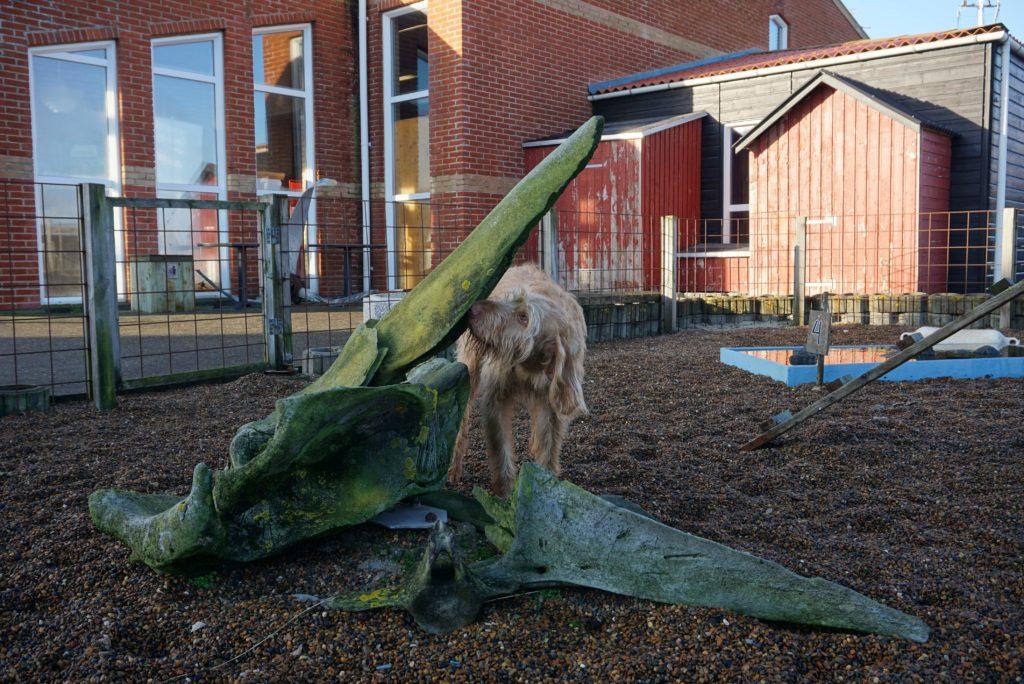 Hund schnüffelt an Knochen_tierisch-in-fahrt.de