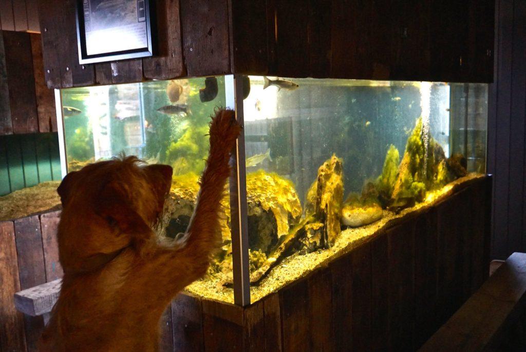 Mit Hund im Jyllands Akvariet_tierisch-in-fahrt.de