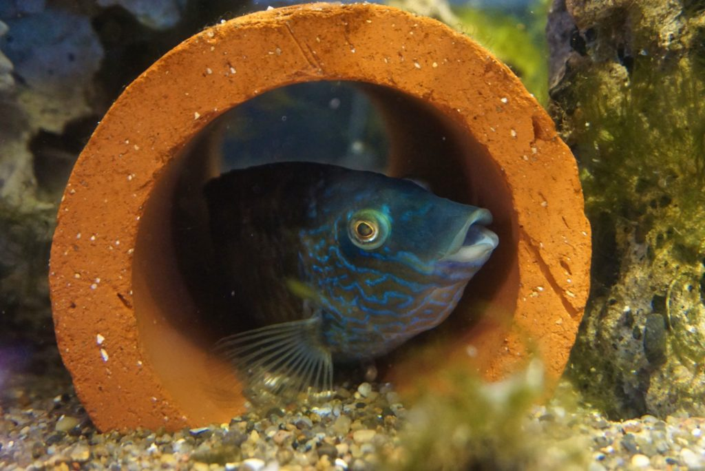 Fisch im Aquarium_tierisch-in-fahrt.de