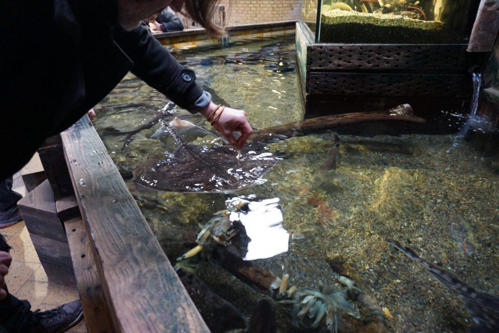 Streichelbecken im Jyllands Akvariet_tierisch-in-fahrt.de