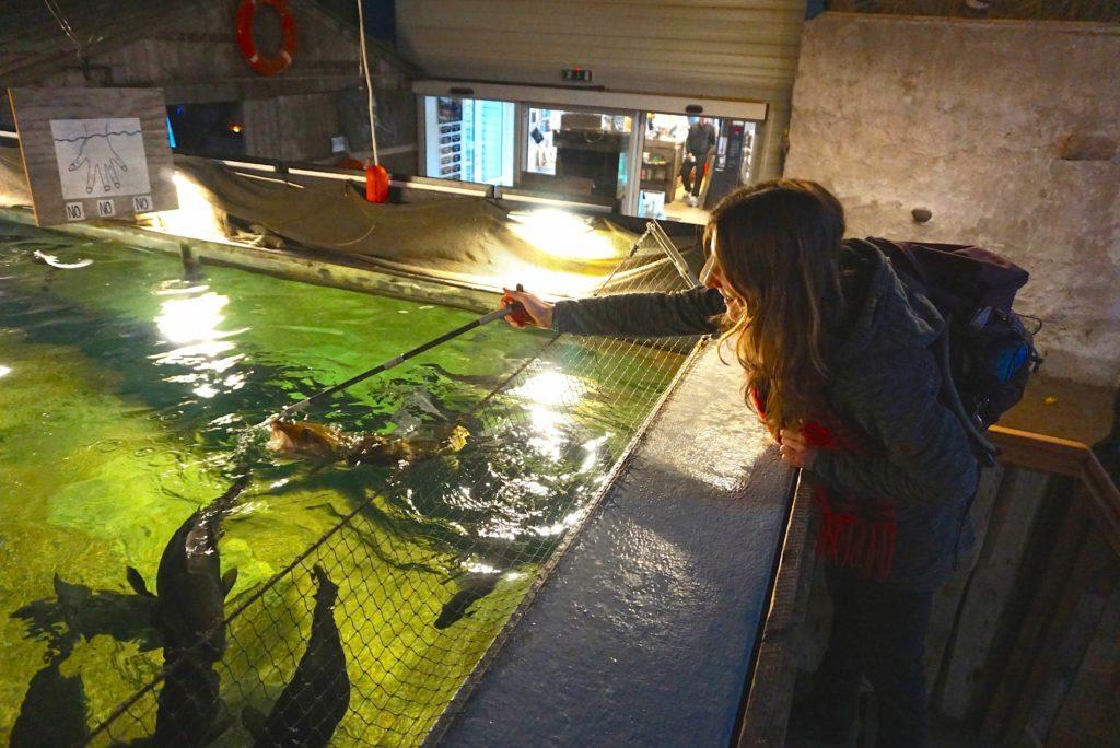 Fischfütterung im Aquarium_tierisch-in-fahrt.de