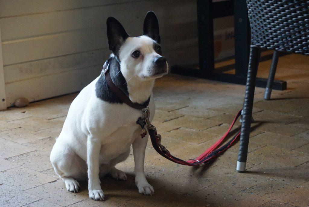 Hund wartet_tierisch-in-fahrt.de