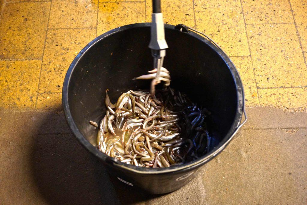 Kleine Fische als Futter_tierisch-in-fahrt.de