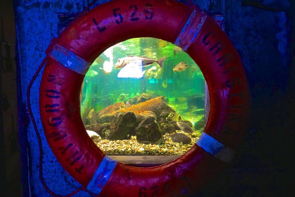 Rettunsgring Aquarium_tierisch-in-fahrt.de