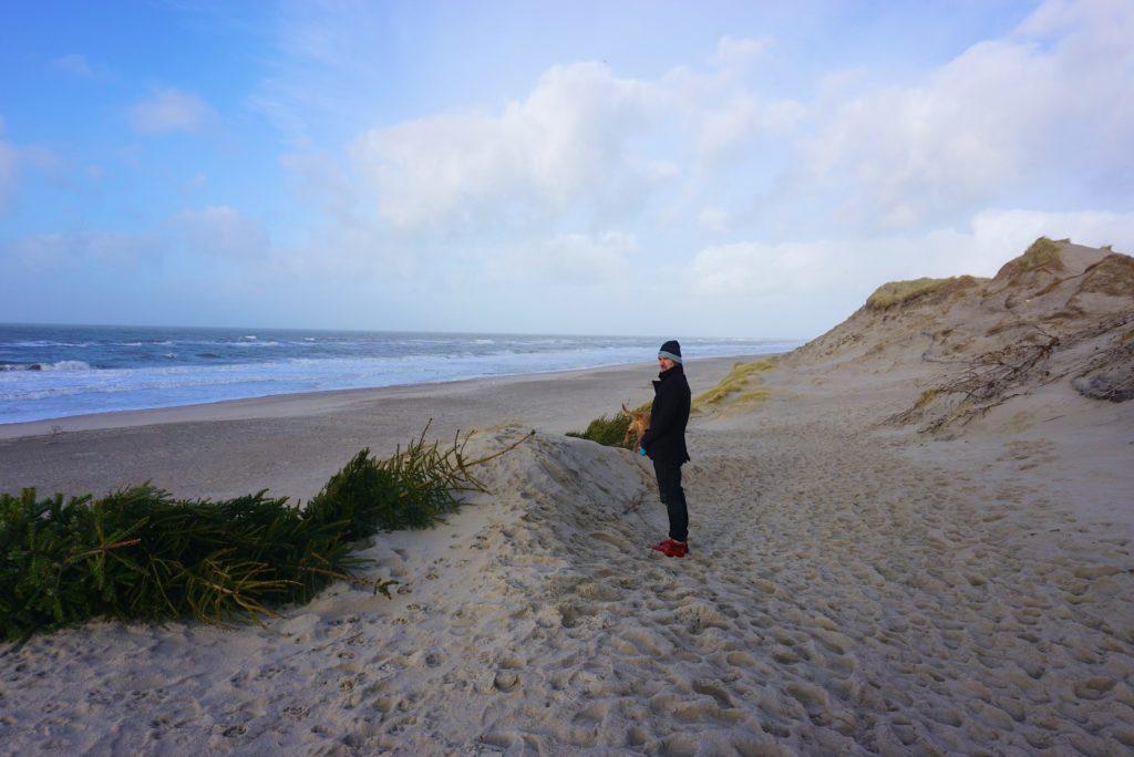 Tannenbäume als Dünenschutz - Naturerlebnis Dänemark