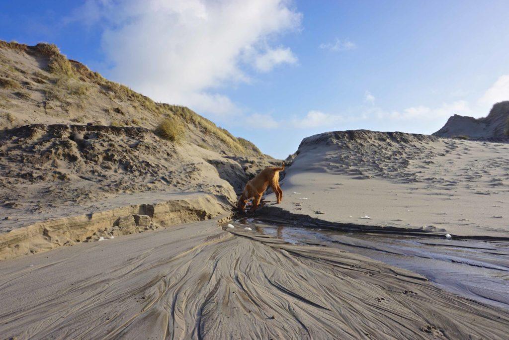 Dünendurchbruch Husby – Naturerlebnis Dänemark