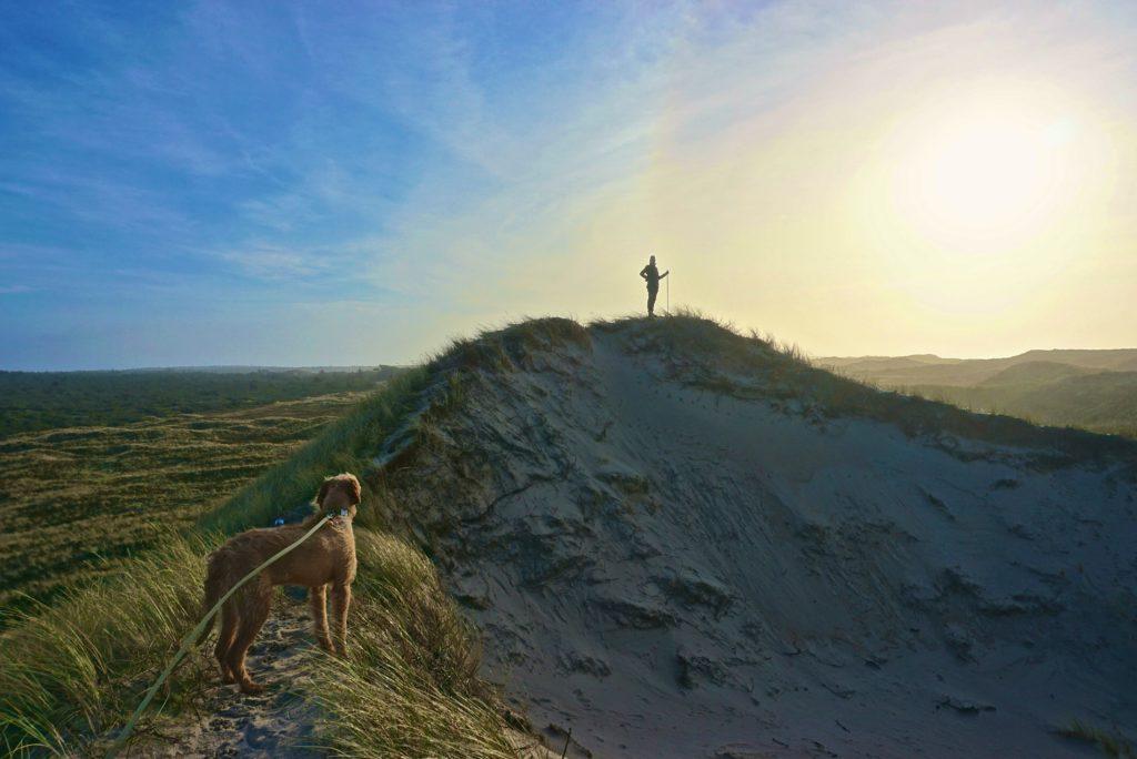 Dünenwandern Dänemark_tierisch-in-fahrt.de