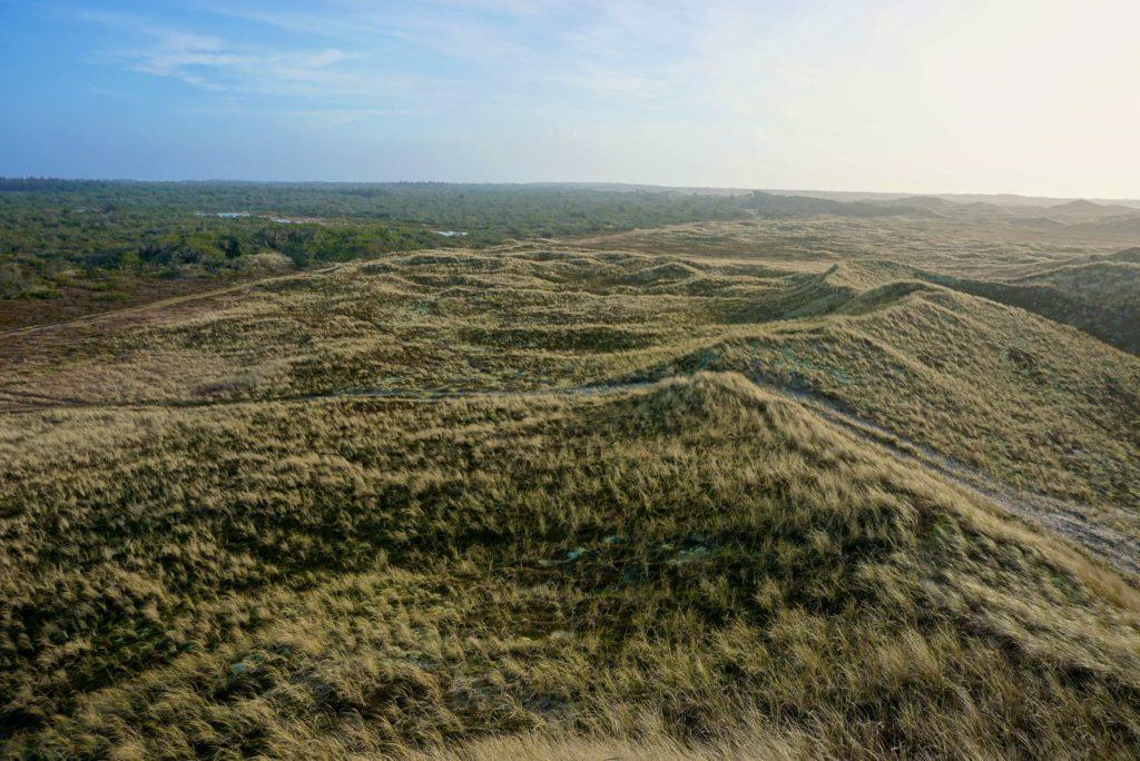 Dünen und Wald – Naturerlebnis Dänemark_tierisch-in-fahrt.de