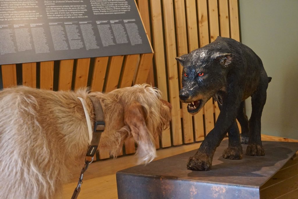 Mit Hund durch Katalonien_tierisch-in-fahrt.de