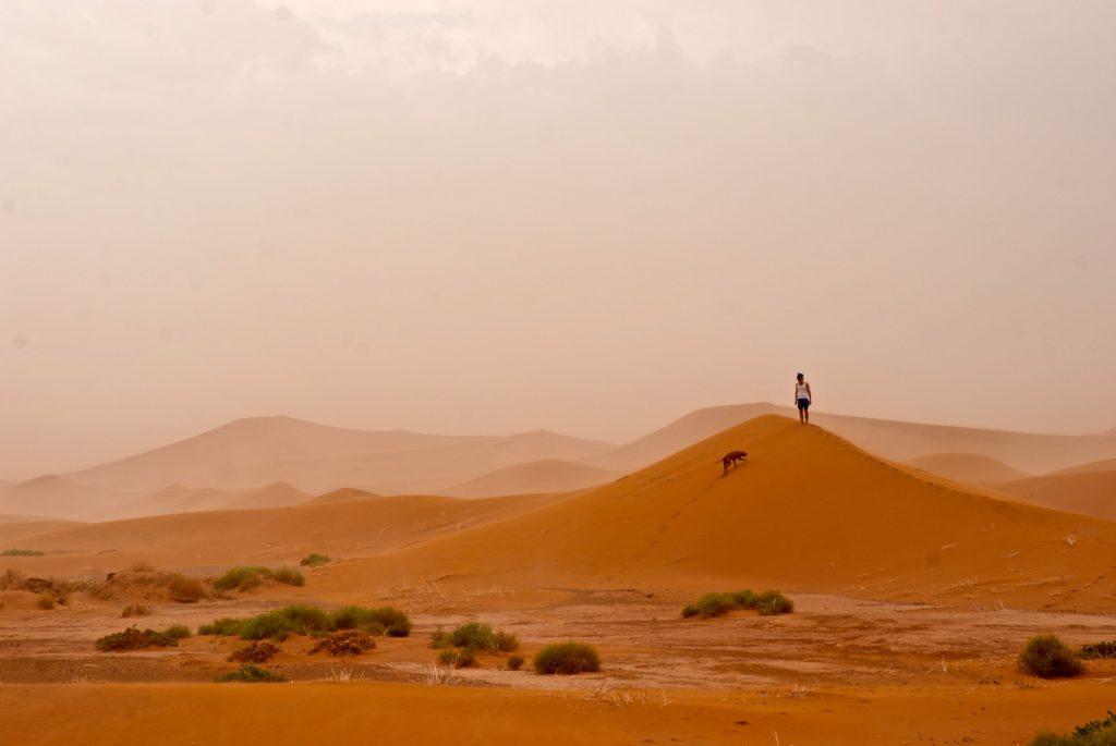 Mit Hund in der Sahara_tierisch-in-fahrt.de