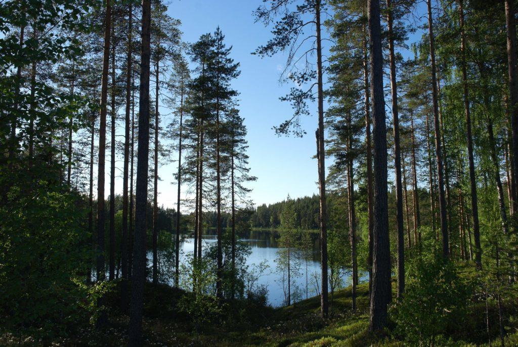 Waldsee in Finnland_tierisch-in-fahrt.de