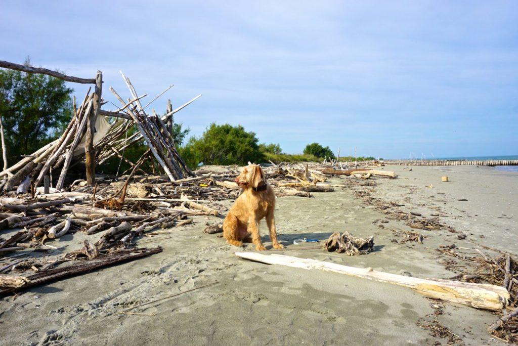Hund am Strand von Boccasette_tierisch-in-fahrt.de