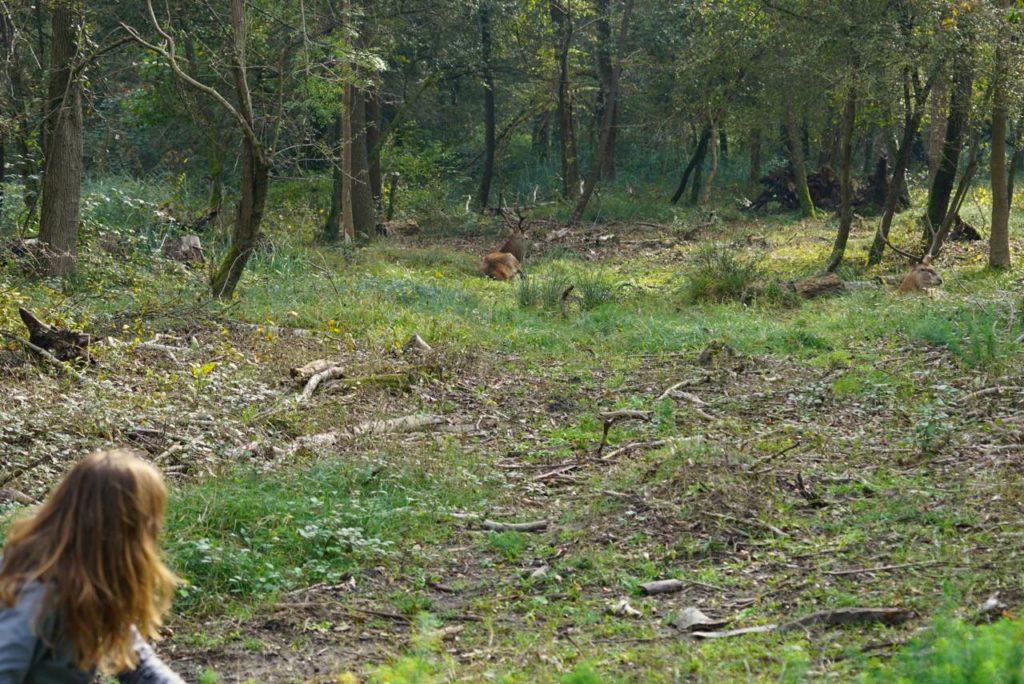 Dem Hirsch auf der Spur, Bosco della Mesola_tierisch-in-fahrt.de