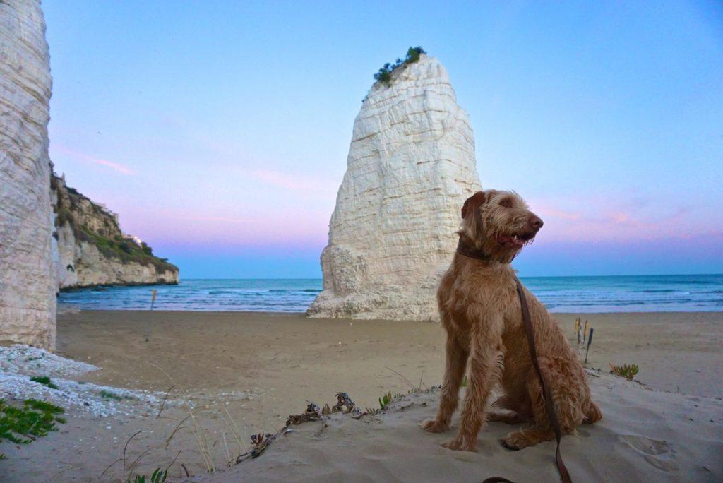 Mit Hund auf Italiens Stiefelsporn unterwegs_tierisch-in-fahrt.de