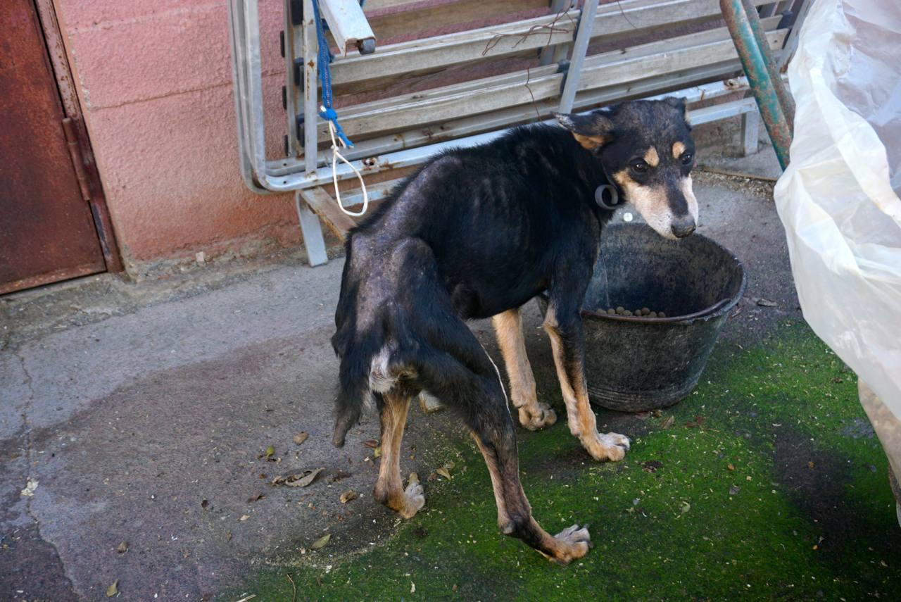 Tierschutzhund sucht Zuhause, Sizilien_tierisch-in-fahrt.de