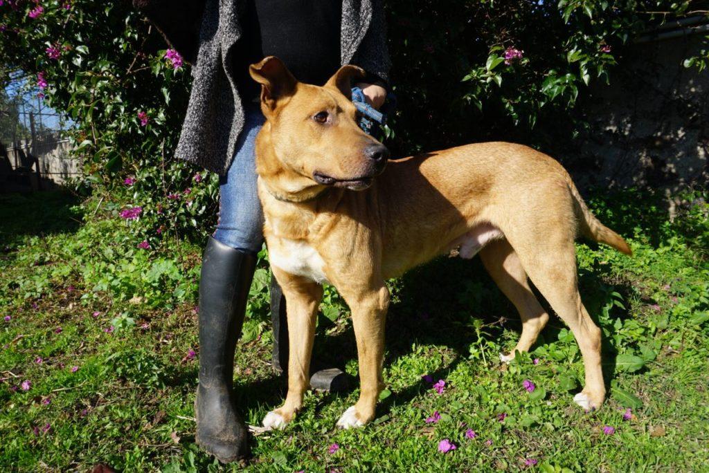 Hund zu vermitteln, New Ranch Dog Club Sizilien_tierisch-in-fahrt.de