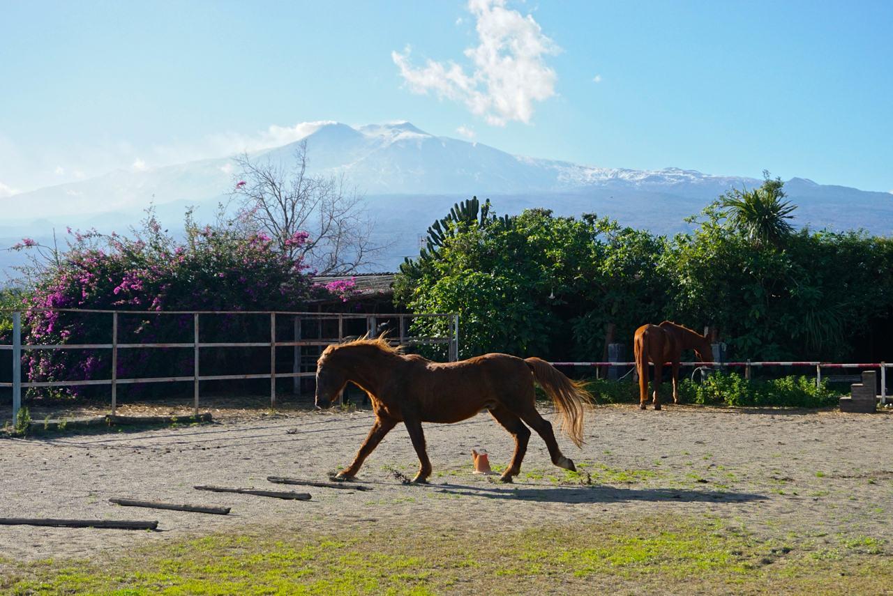 Pferde auf Sizilien_tierisch-in-fahrt.de