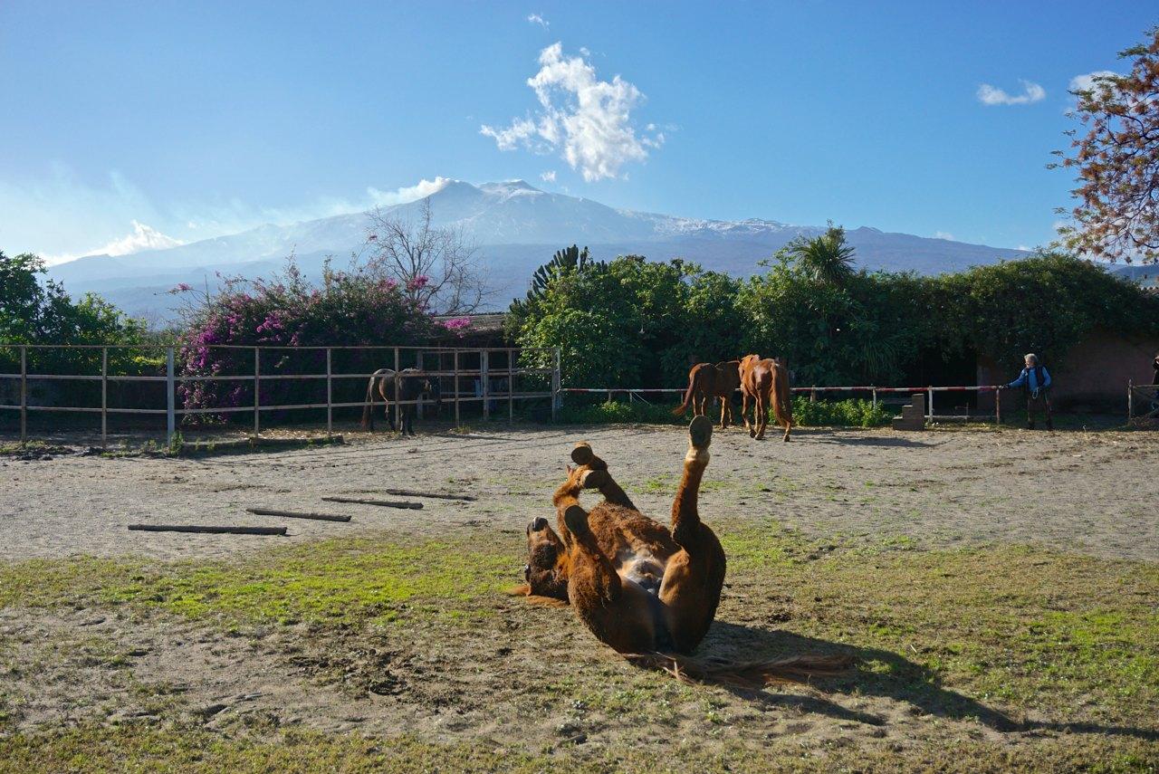 wälzendes Pferd am Ätna, Sizilien_tierisch-in-fahrt.de