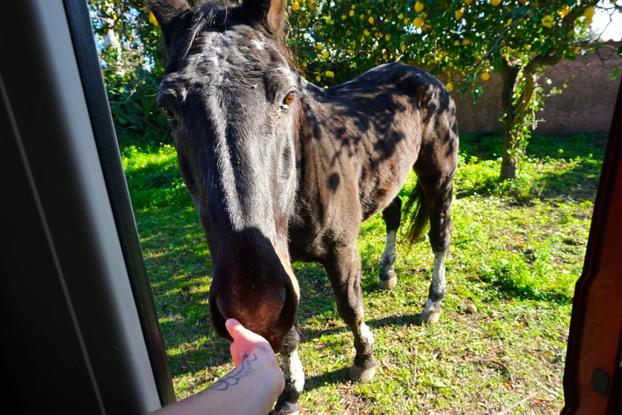 Pferd am Wohnmobil_tierisch-in-fahrt.de