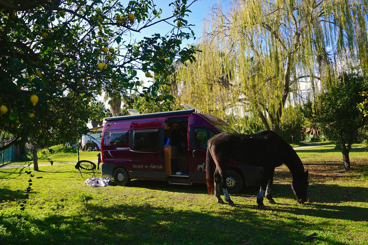 Camping und Pferde_tierisch-in-fahrt.de