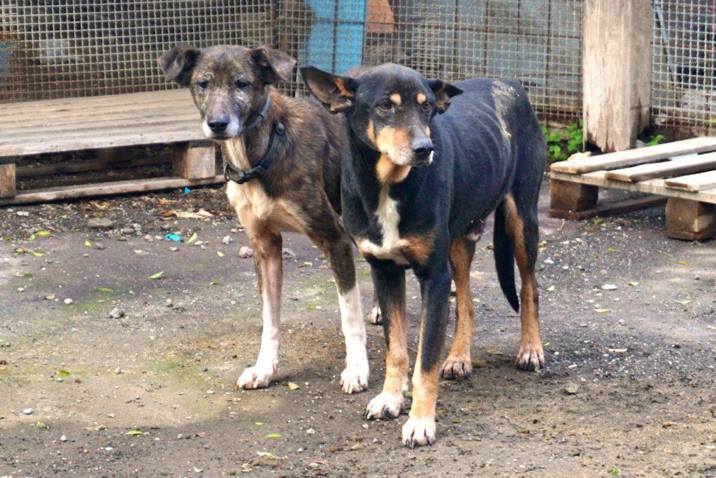 Tierschutz auf Sizilien, New Ranch Dog Club_tierisch-in-fahrt.de