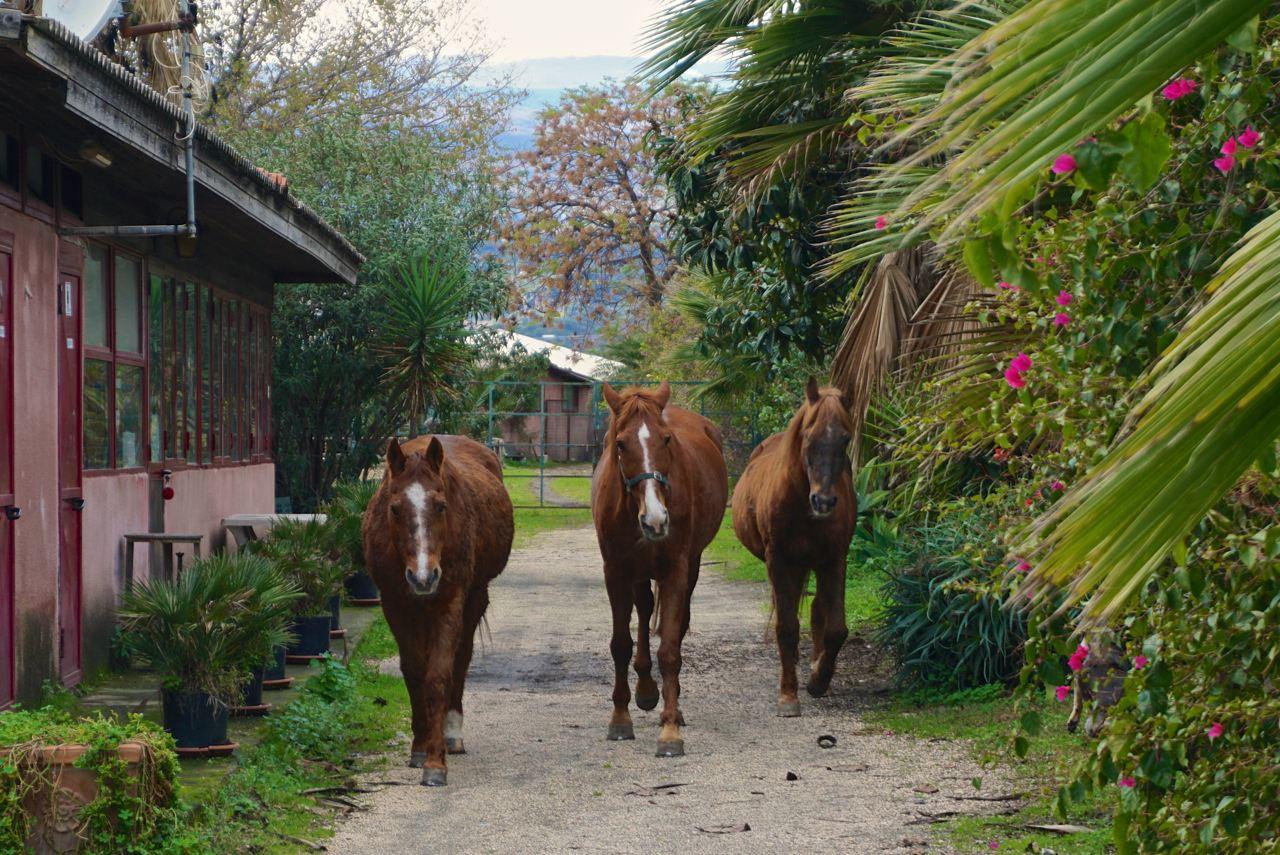 Pferde auf der Ranch in Sizilien_tierisch-in-fahrt.de
