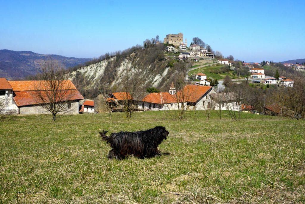 Bergamasker in Italien, Piemont_tierisch-in-fahrt.de