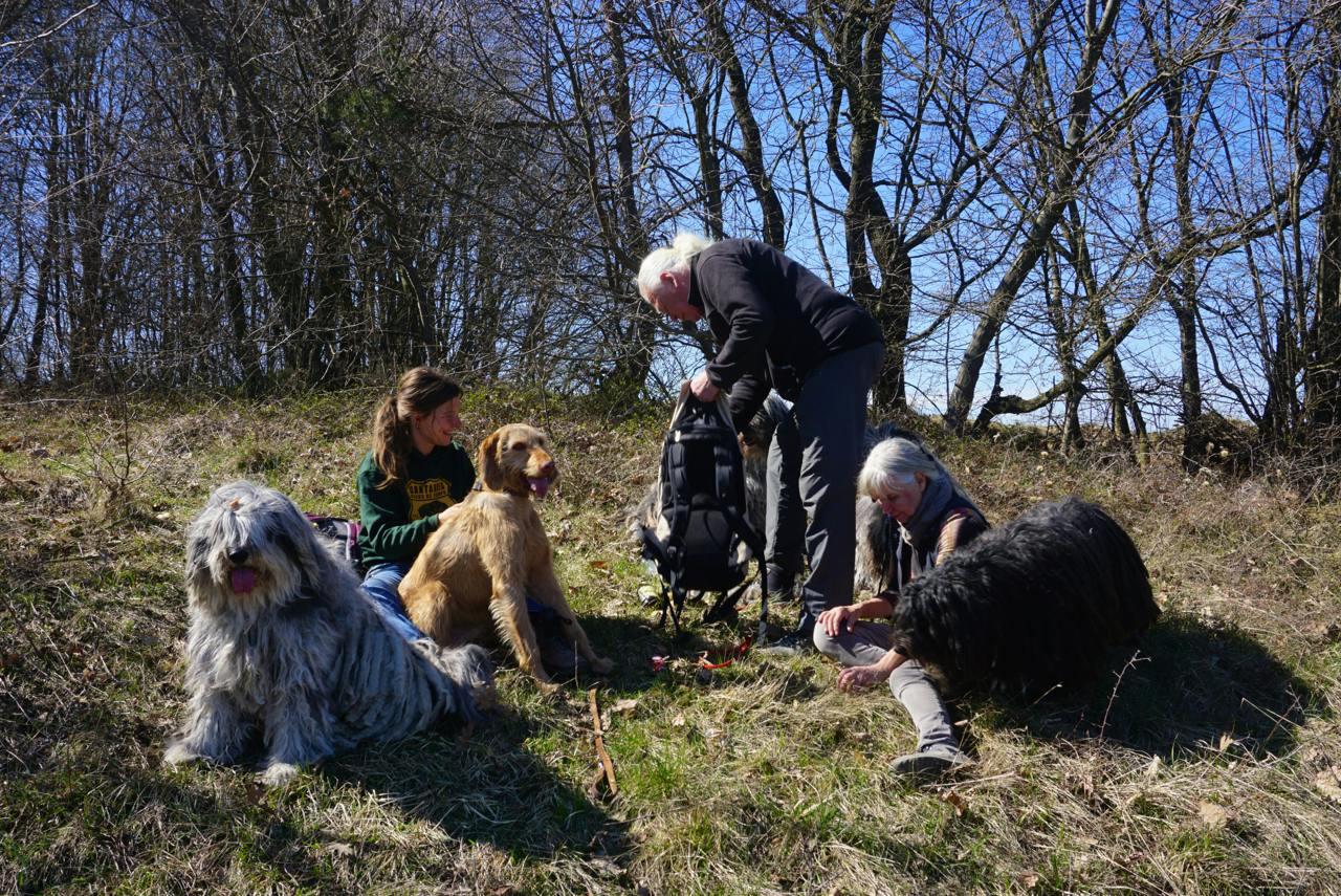 Picknick mit Hund_tierisch-in-fahrt.de